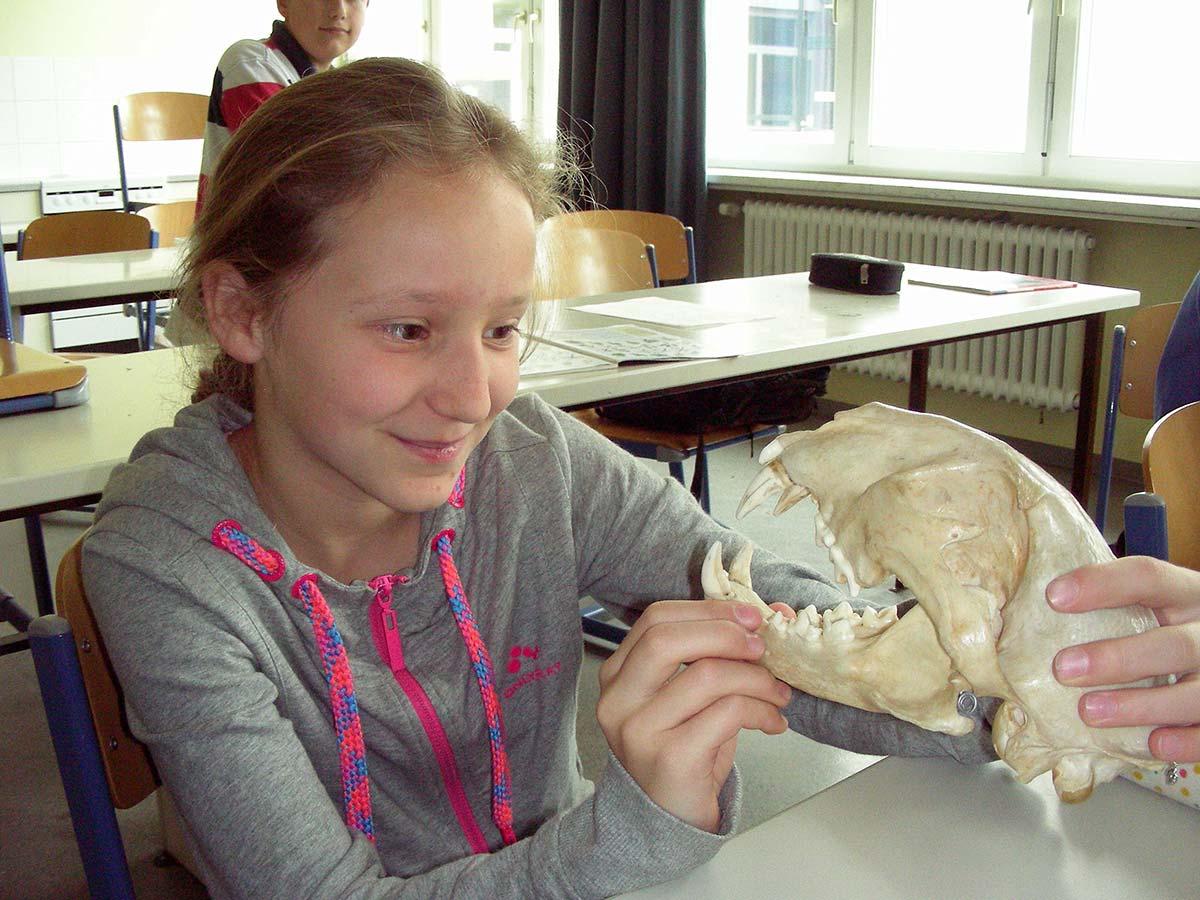 Untersuchung eines Schädels im Realgymnasium | Reithmanngymnasium